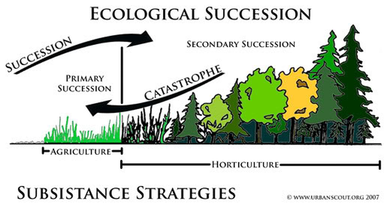 ecological succession and natural selection Ecological succession is the observed process of change in the species structure of an ecological community over time within any community some species may become.